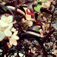 shoes by xTive