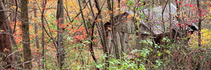 Shack In The Forest by UriahGallery