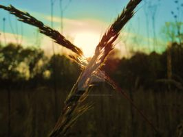 Wheat by TimeKiller357
