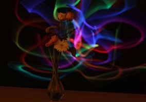 IMG_8104 by Alicss