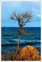 lonely tree ... by OrazioFlacco