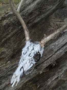 deer skull #1 by ann3tt3