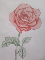 Rose (color) by 13Sofie13