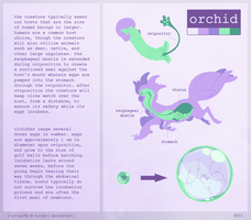orchid reproduction reference by VCR-WOLFE