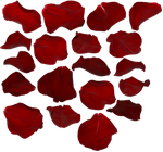 rose petals by two-ladies-stocks