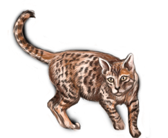 Bengal by whispofcloud