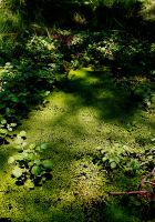 Swamp Shadows by missdjt