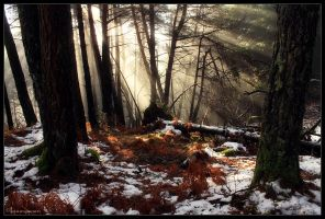 Mist and Sunrays by FlorentCourty