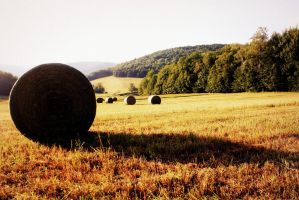 Hay by atomiccupcake57