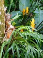 Staghorn Ferns and Heliconia by joeyartist