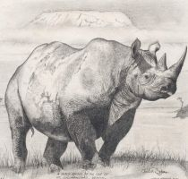 White Rhino by spookyjules