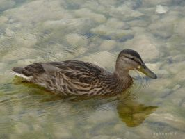Duck by YumiKFPhoto
