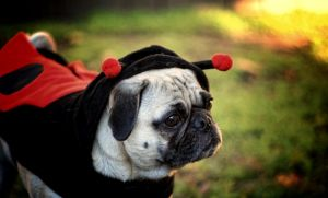 Lady Pug 2 by garnettrules21