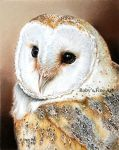 """Barn Owl"" - Realism by robybaer"