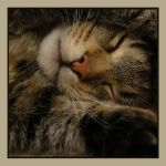 sleeping cat by werdza