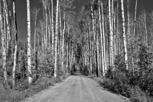 aspen alley - BW by eDDie-TK