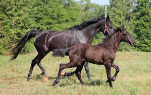Mare and Foal 5 by MountainViewStock
