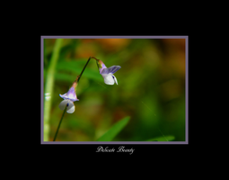 Delicate Beauty - Print and Wallpaper Version by FaerieBert