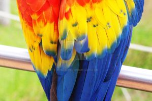 Macaw feathers by windali18
