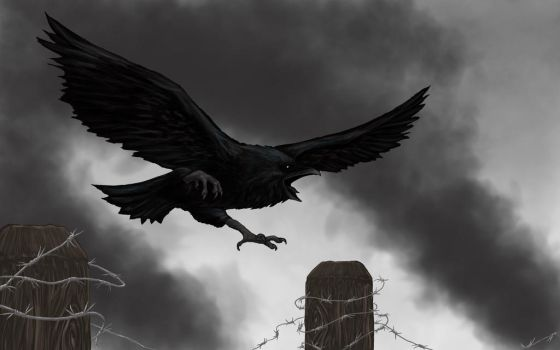 Raven on the border fence by Racym