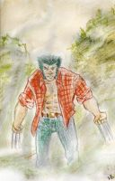 Wolverine Into the Wild by tarunbanned