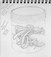 Octopus in a Bottle by pixelfish