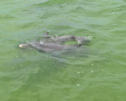 Mother and Baby Dolphin 1 by Lauren-Lee