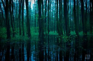 Evening Forest 2 by FilipR8