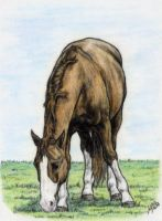 a grazing horse by Embers