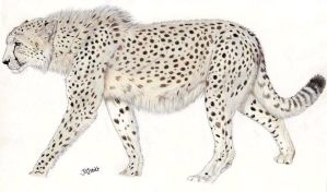 Giant Cheetah by Jagroar