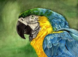 Parrot by Cyb007