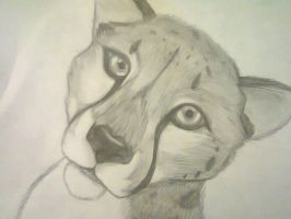 Cheetah by Mitchthefoxcatwolf