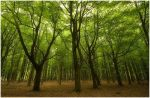 Spring Forest by Mohain