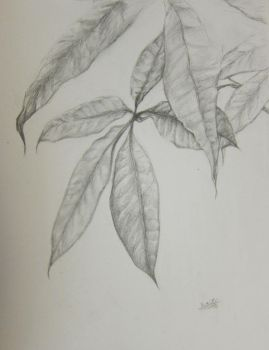 study of leaves by can-u-hear-me