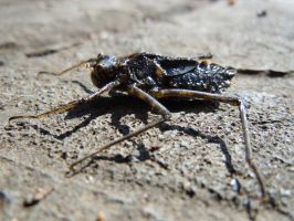 Ugly Water Bug 0652 by EchoingDroplet