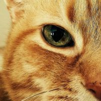 Cats Eye by AnimalLover2436