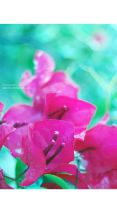 flowers by SaLoOnA