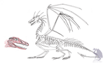 Dragon skeleton + facial muscles by Flying-With-Dragons