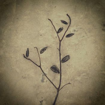 Charcoal and plant matter II by RickManuel