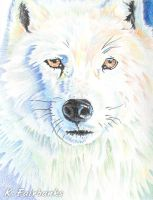 White Wolf (pencil drawing) by eyeqandy