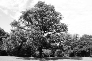 A big tree and cows by MikeyHramiak