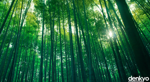 The Bamboo Grove by denkyo