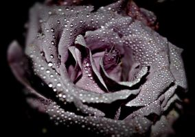 Purple Darkness by Sarubia