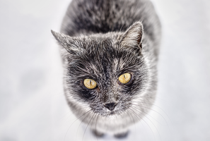 Look into my big, yellow eyes by Sharone