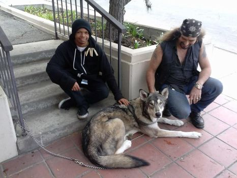 So I met this wolf in LA... by sirk141
