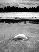 shell on sand bar by hebazAtion