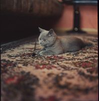 my cat by frida-vl