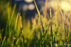 Day 48. Green grass and yellow sun by smilejustbcuz