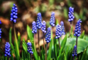 Spring flowers, I do not know your name by Tjabula