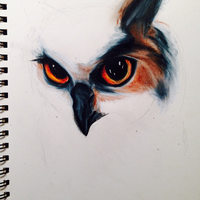 Traditional owl headshot WIP by toniccpan